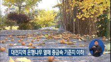 대전지역 은행나무 열매 중금속 기준치 이하