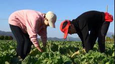 모닝와이드 3부 6942회 다시보기: 평화로운 젊은 농부 SBS