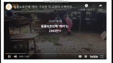 동물단체 케어 동물구조후 안락사 박소연대표 두얼굴